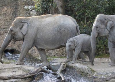 Zoo_Zuerich